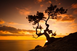 Zen is a tree on the cliff rocks and sunset over the sea