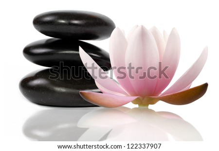 Zen stones and beautifl lotus, white background