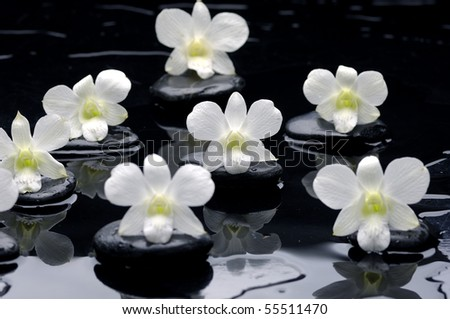 Zen stones and orchids with water drops