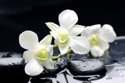 Zen stones and tiger's orchids with water drops