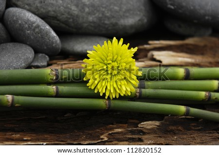 zen Stones with bamboo grove and gerbera on Driftwood