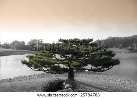 Zen tree in japanese botanic garden with lake
