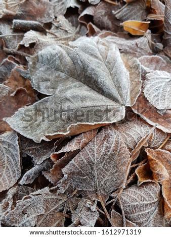 zimowy motyw liści - tło  Zdjęcia stock ©