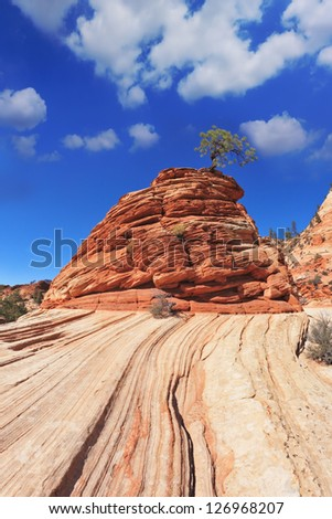 """Zion National Park, USA. Striped hills of red sandstone. The famous Jumping Tree """"Jerky-tree"""""""