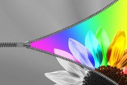 Zipper revealing a colorful sunflower