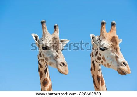 ZOO animals #628603880