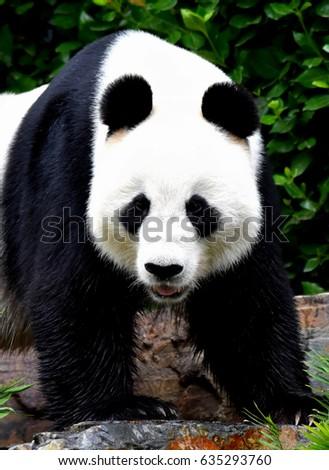Zoo animals #635293760