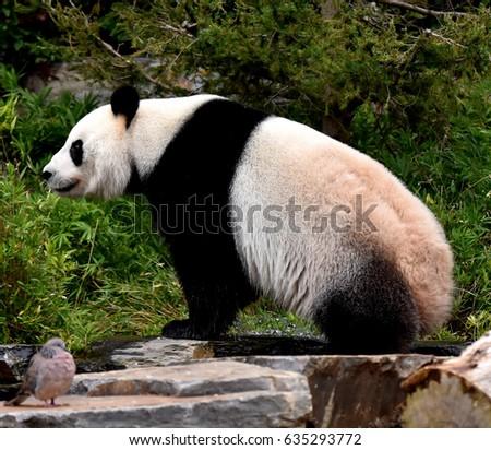 Zoo animals #635293772