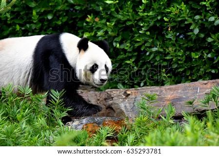 Zoo animals #635293781