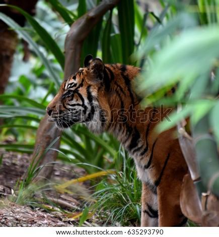 Zoo animals #635293790