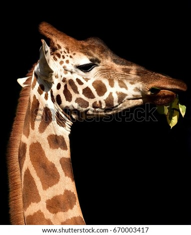 Zoo animals  #670003417