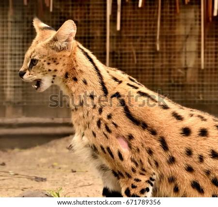 Zoo animals- Serville #671789356