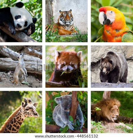 Zoo collage, nine pictures, wildlife