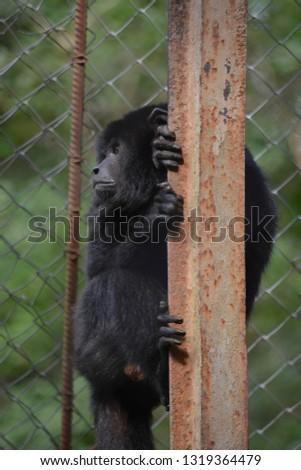 Zoo in Assuncion, Paraguay #1319364479