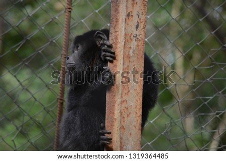 Zoo in Assuncion, Paraguay #1319364485