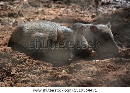 Zoo in Assuncion, Paraguay #1319364491