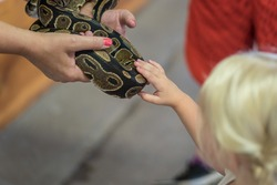 zoo volunteer showing a snake to a child and letting her touch the snake