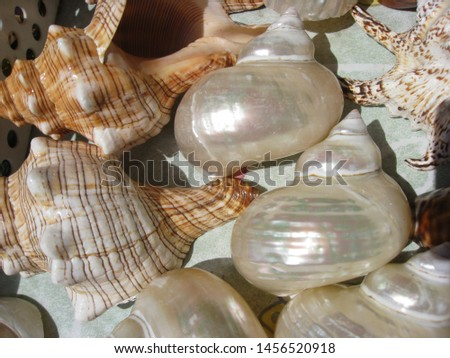 Zoological image of spiral shell showing mother of pearl spiral. The spiral shell is a shell.