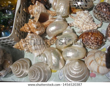 Zoological image of spiral shell showing mother of pearl. The spiral shell is a shell.