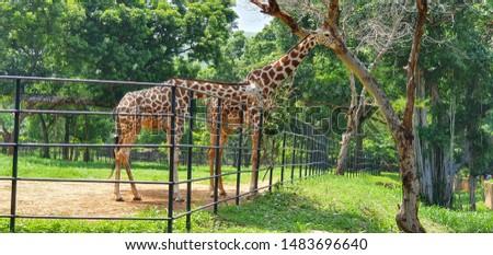 Zoological park dangerous Wild animals