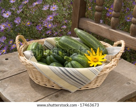 Zucchinis and acorn squashes straight from the garden in a basket on an old wooden chair outdoors by the wildflowers.