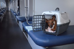 Zvergpinscher sits in a transport case for animals, on the train. A dog in a plastic cage for traveling in transport. Travel with a pet. Pet carrier.