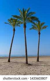 Stock picture of palm trees at Cullera beach, Spain