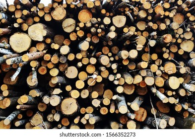 A stock pile of timber, Logs stacked on logging and woodworking industry. Сhopped down trees, deforestation, timber industry.