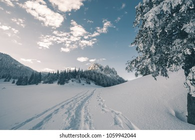 Stock snowy trees in forest photo taken at wide angle lens over blue sky