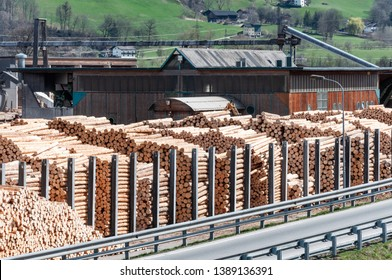 Stock timber in saw mill. Loader working in saw mill. A lot of trunks, stack of wood lumber.