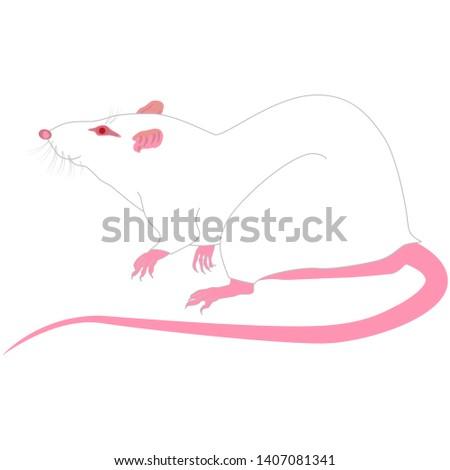 Крыса реалистичный вектор. Зоомагазин эмблема. Ручная белая крыса.  Сток-фото ©