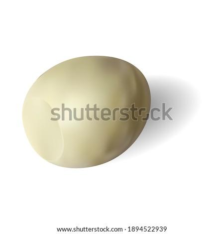 Яйцо без скорлупы. Яйцо куриное очищенное. Реалистичный векторный рисунок. Peeled chicken egg. Realistic vector drawing. Сток-фото ©