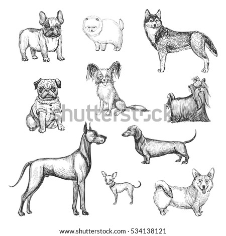 a collection of sketches breed