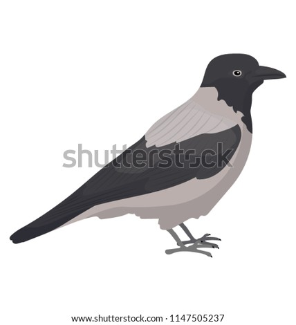 a crow like bird with small