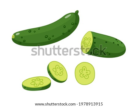 A whole cucumber, sliced cucumber pieces, half a cucumber. Flat style vector illustration isolated on white background.