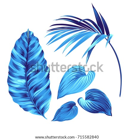 3 amazing vector palm leaves. beautiful elegant natural motifs. can be used for textile, stickers, websites. Vector illustration.
