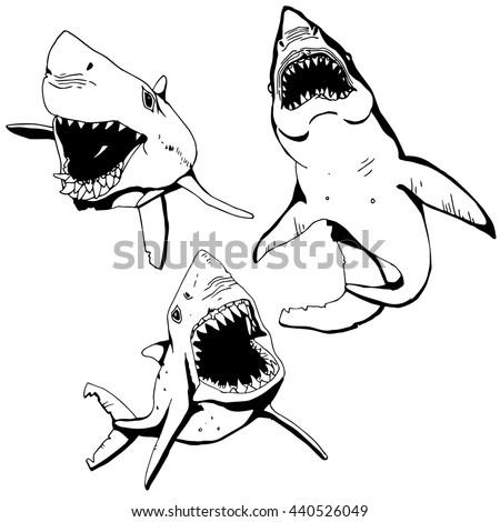 angry shark set