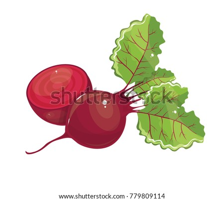 beet vector simple illustration