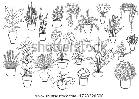20 black and white illustrations of house plants