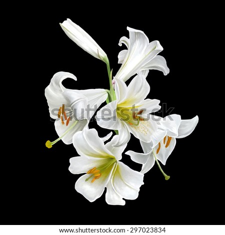 bouquet of flowers white lily isolated