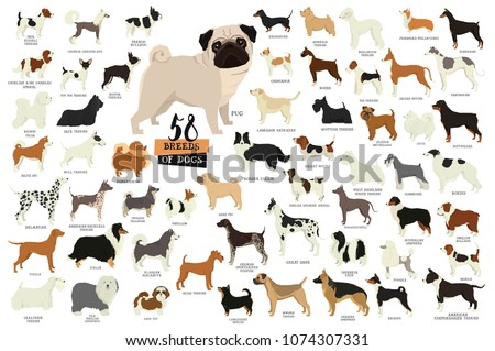 58 breeds of dogs isolated