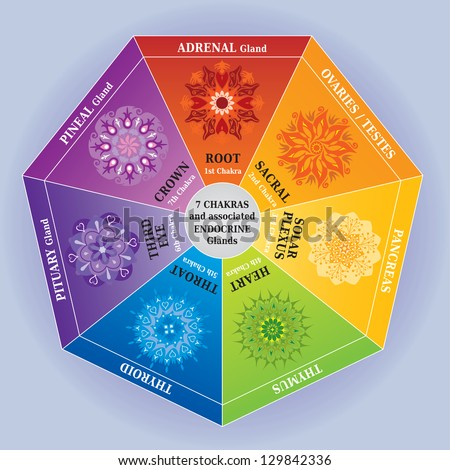 7 Chakras Color Chart with Mandalas and Endocrine Glands