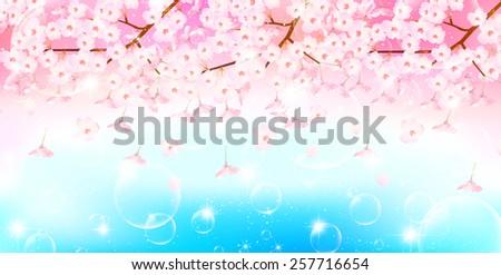 Cherry blossom background  - Shutterstock ID 257716654