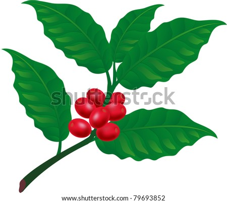 Coffee tree branch. Element for design vector illustration