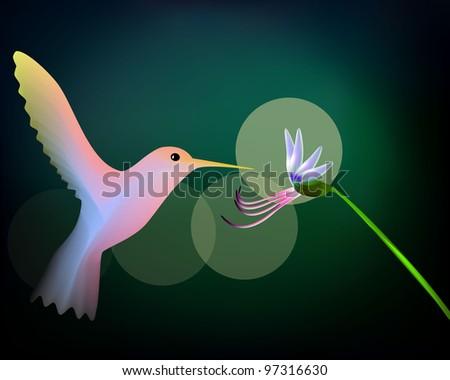 Colibri and flower