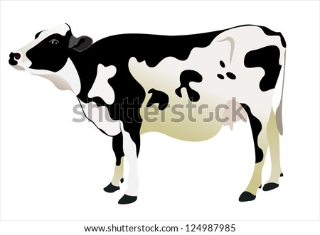 cow isolated on a white background - stock vector