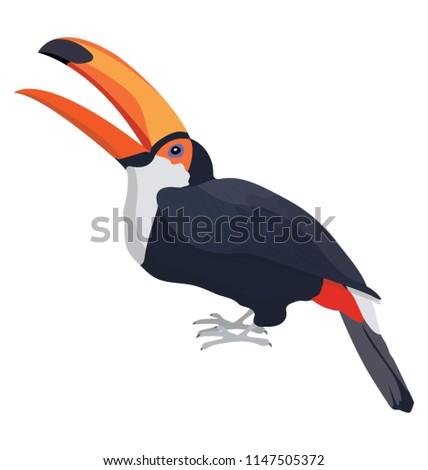 crow like colorful bird having