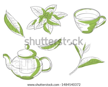 Cup leaves tea leaves teapot hand drawn