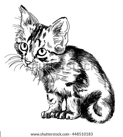 cute tabby kitten  drawing by