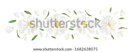3d realistic chamomile isolated